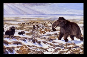 Beringia winter scene, including mammoth, horse, bison, and musk ox. George Teichmann illustration.